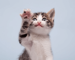 reachingcat